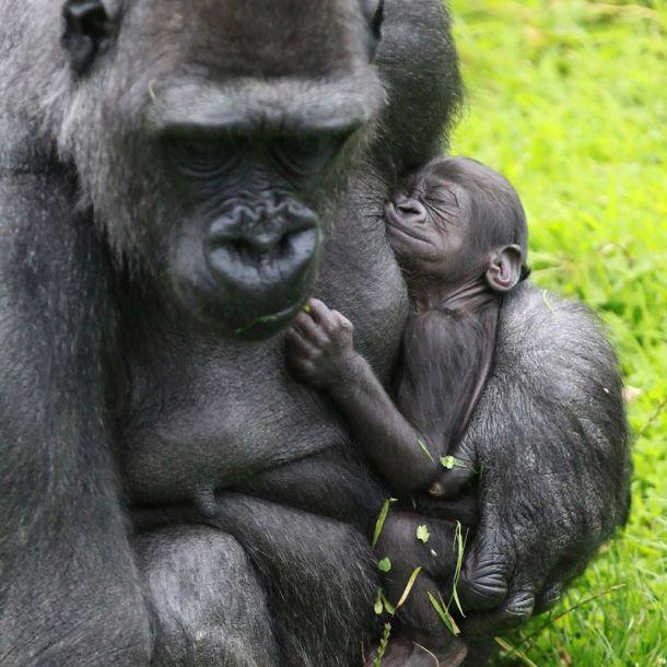 Dzīvnieku mazuļi izbauda mammas tuvumu līdz brīdim, kad tie ir gatavi spert soļus lielajā pasaulē.